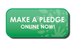 Make a Pledge Online Now!